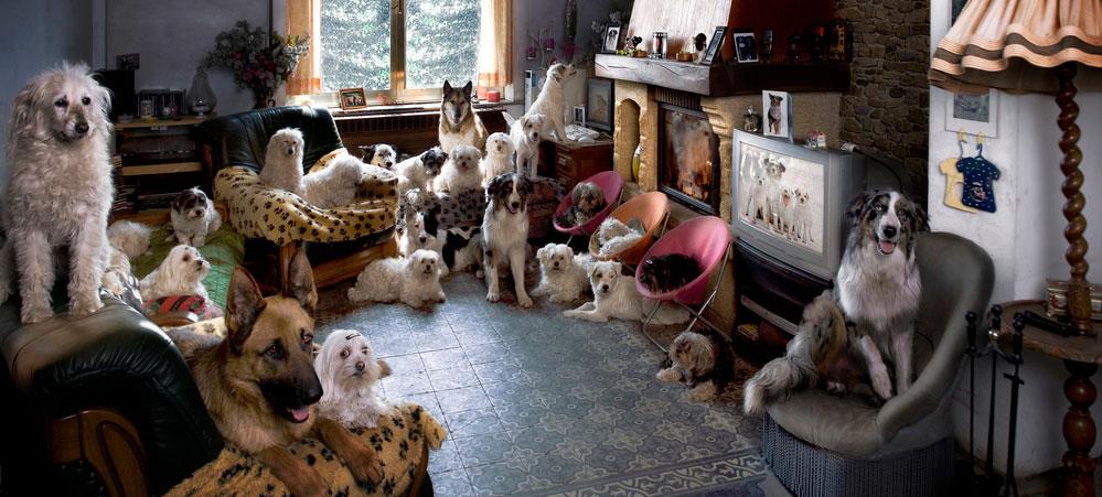 professional pet sitter dallas paws professional pet services